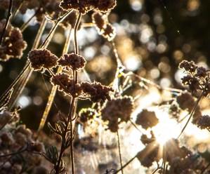 Backlit flora along the Verdugo Mountain trails