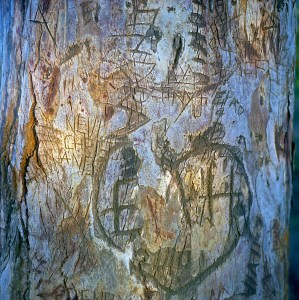 Tree graffiti in Griffith Park, Los Angeles, CA
