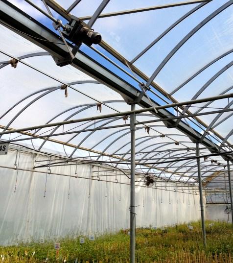 Greenhouse roof in commercial garden nursery