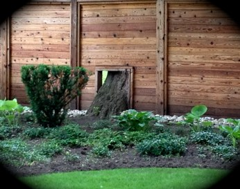Fence with tree trunk