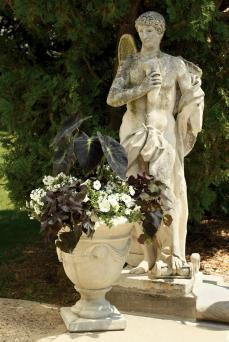 Black and white container planting