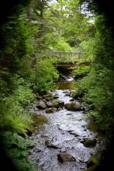 Walkway near creek