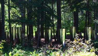 Reflective containers in forest