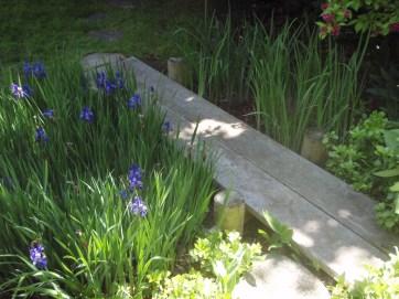 Dry creek with irises