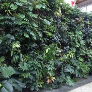 A living wall at the Royal Botanical Gardens in Burlington, Ontario. Shot January, 2016.