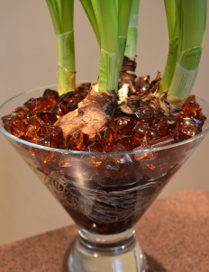 Bulbs and beads in a wide brimmed vase with glass beads.