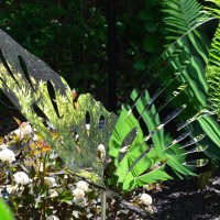 Layered hedges to shining butterflies: Big ideas for small gardens