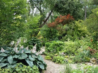 Plants in the garden at Lost Horizons