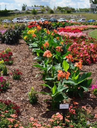Rows of annuals and perennials in the trial gardens at Landscape Ontario