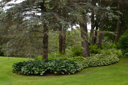 Islands are created around trees using perennials in deep beds.