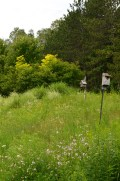 A closer look at the meadow.