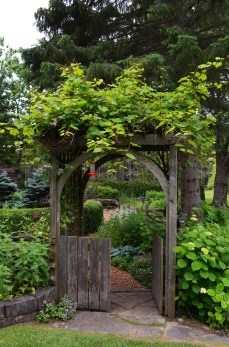 A small garden enclosed by a wooden fence and approached through a vine covered arbor with gate.