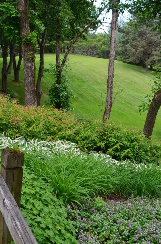 Rows of perennials stripe the hillside flanking the driveway of this woodland garden.