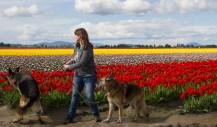 Leo spots the tulip security guy