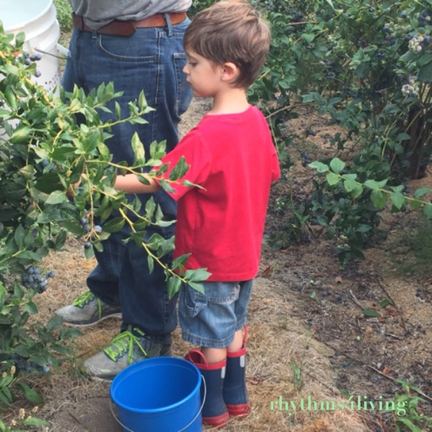 blueberry picking, outdoor fun, family activity