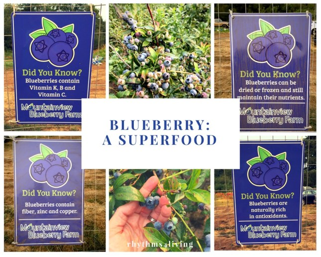 blueberry, superfood, wellness