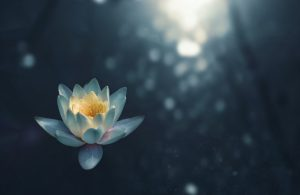 flower on water, managing alcohol and stress
