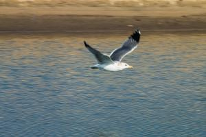 seagull flying over shore, finding your safe person