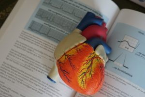 diseases caused by alcohol model of a human heart