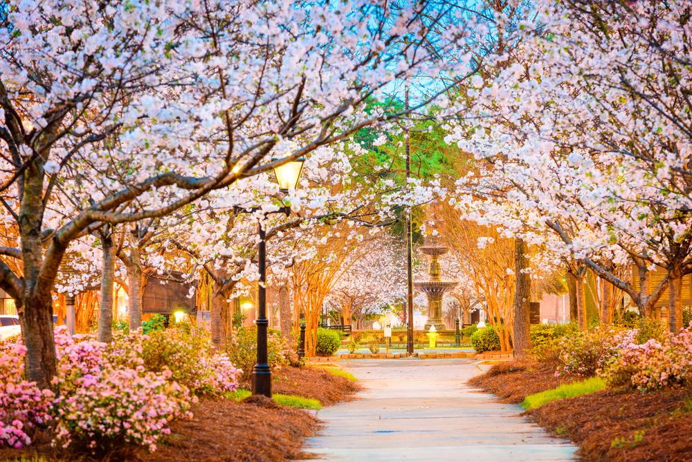 macon-georgia-usa-spring-trees