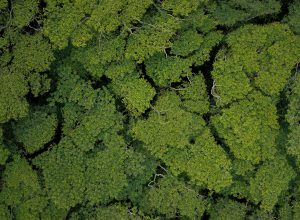 tree tops aerial view