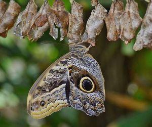 cocoons butterfly, cocoons, butterfly, cocoon, transformation