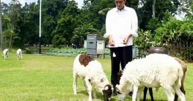 Jokowi dan domba