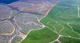 Jutaan hutan Indonesia