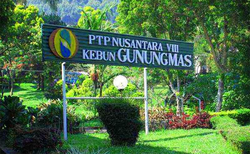 PTP Nusantara VIII Kebun Gunung Mas.