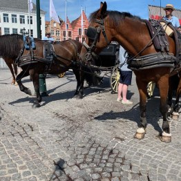 Horse and cart at Grote Markt - Bruges