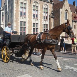 Horse and cart ride - Bruges