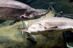 veľké ryby malý rybník Zoznamka Prečo je uhlík 14 používa v rádioaktívnom datovania