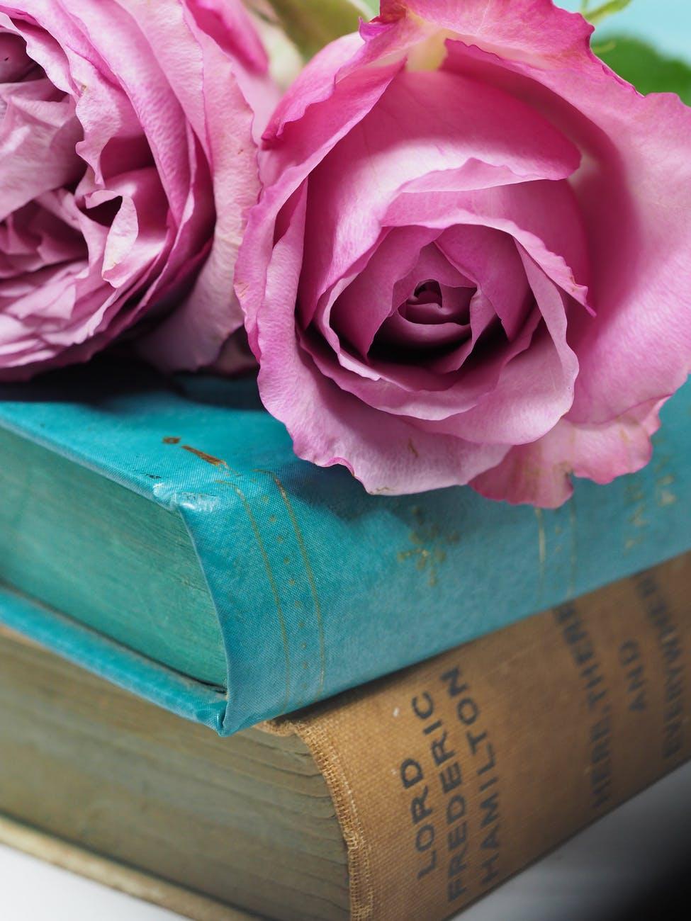 pink rose flower on blue hardbound books