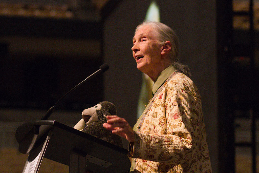 Jane_Goodall_at_Mizzou_Arena_(facing_left)