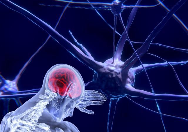 cerebro humano, neuronas.