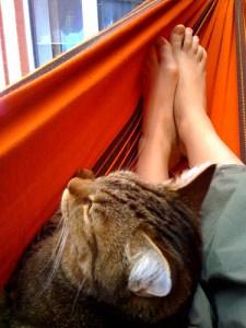 Cat in the hammock by 1ieve  - Ricardo Nuñez Blog