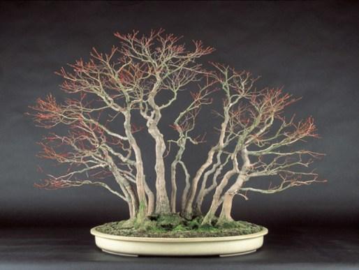 S Hattori - bonsaiexperiensecom 1