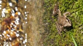 A frog taking a sunbath.