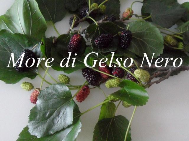 02_more_di_gelso_nero