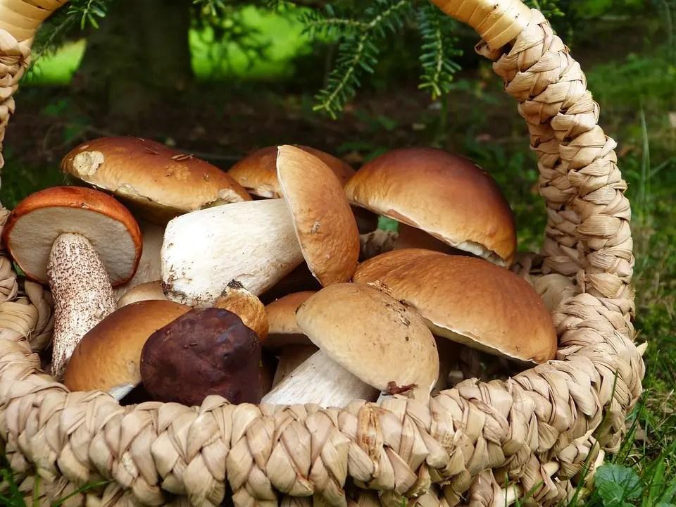 Tagliatelle ai funghi