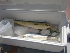 Fish in the box