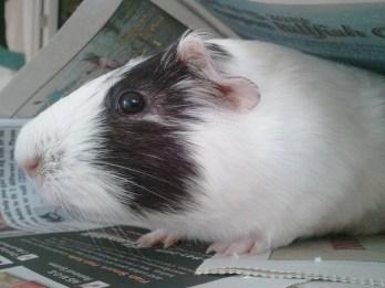 He's a very educated piggy