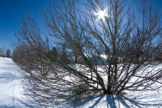 Our bare Rose-of-Sharon bushes lining our driveway, with the sun shining through. This image was made with my 10-17mm fisheye, which has six aperture blades.