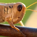 I photographed this grasshopper in the yard recently.