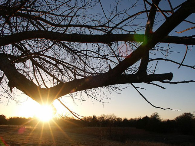 The sun sets on our old Walnut tree earlier this month. Note that the sun is surrounded by 14 rays of light. This is a 14-point sunstar.