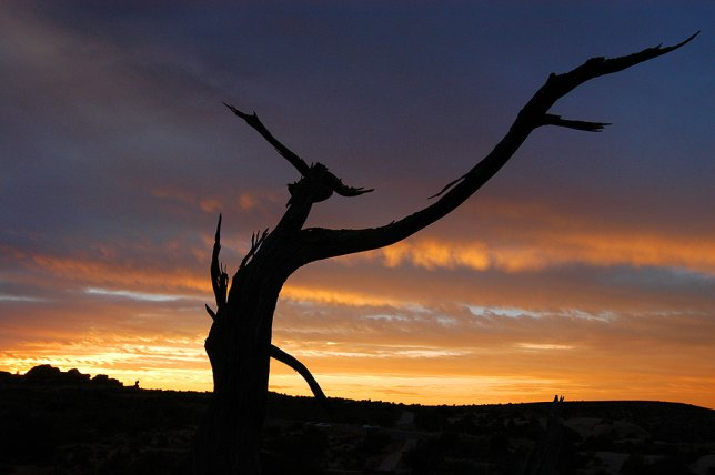 A tree branch takes on the appearance of a bird set against the setting sun at Arches National Park, Utah, on our wedding day, October 12, 2004.