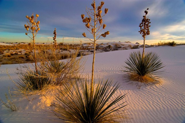 Despite the technological limitations of earlier digital cameras like the Nikon D100, it's hard to argue with an image as beautiful as this one at White Sands National Monument.