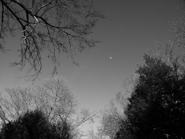 The moon rises above tree branches as buds just appear on their tips.