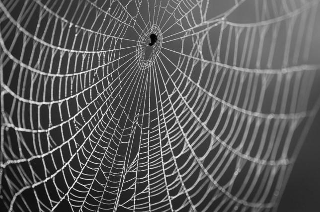 Spider Web on Redbud, Byng, Oklahoma, May 2019 | AF Nikkor 180mm f/2.8