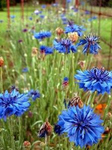 Abby's wildflowers earlier this week